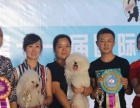 新疆四月宠物美容师学校火热报名