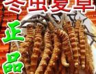 大连(西岗 中山 沙河区)回收冬虫夏草/海参燕窝/极草5X片