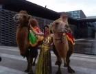 租赁重庆周边海狮表演美人鱼展览珍禽萌宠展百鸟展马戏团表演