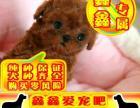 北京买泰迪熊幼犬 最好品质 签订协议 来场可看狗父母