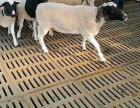 养羊板厂价直销