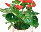 罗湖留医部绿植批发 办公室植物销售 公司logo植物墙