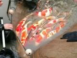 上海卖鱼缸的地方上海鱼缸定制上海观赏鱼热带鱼出售专卖