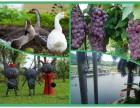 湖尔美农场是较有特色较有体验价值的旅游+拓展+休闲+美食基地