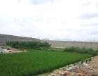 龙韵雅苑往西两公里处 厂房2200平米