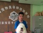 哈尔滨宠物美容师培训沈阳狗狗美容招生