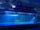承接海洋生物展示岀租、海狮岀租