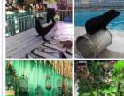 羊驼动物马戏杂技表演出租海洋生物海狮表演美人鱼租赁