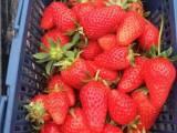 上海农家乐一日游 采草莓西瓜钓大鱼 烧烤划船游滴水湖