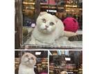 高品质世界各国纯种名猫出售