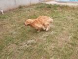 北京工体宠物寄养单独长期寄养散养养老托管接送寄养