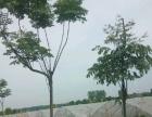 【四亿绿健种植园】加盟/加盟费用/项目详情
