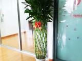 上海綠植辦公室內外綠植租擺定期養護免費配送