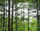 国家4A级景区,伏牛山世界地质公园重要组成部分