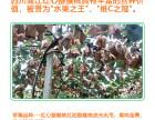 蒲江龙奇奇果园红心猕猴桃奇异果