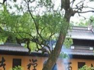 上海到苏州狮子林,定园一日游50元、全包价