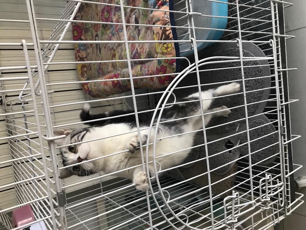 小猫非常健康,没时间照顾了