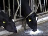 供应奶牛饲料养殖专用添加剂硫酸钙 石膏粉
