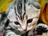 小懒猫找新家啦
