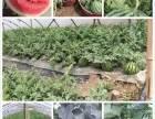 上海浦东农家乐 自助烧烤 钓鱼钓螃蟹 采摘葡萄西瓜玉米