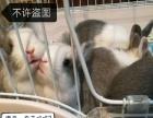 出售各类萌宠兔兔