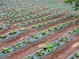 贵州优良的烟草种植地膜供应商,黔东南农用塑料薄膜