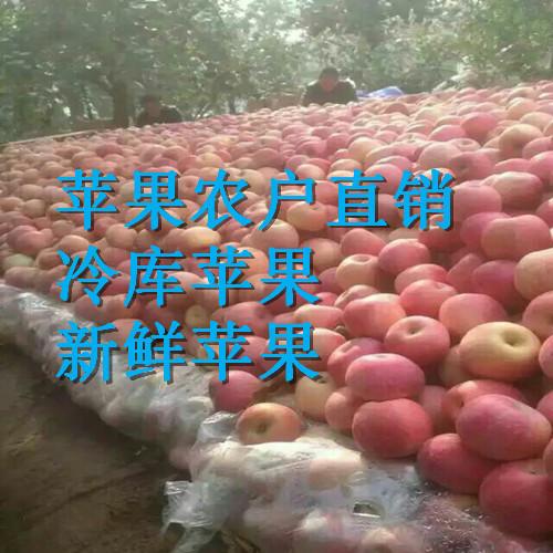 九寨沟苹果批发山东冷库红富士苹果什么价格
