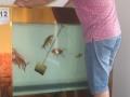 鱼缸清理安装维修服务