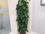 上海綠植租擺辦公室盆栽租售免費設計方案來電即優惠