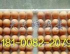崇州養雞場黃雞蛋批發