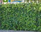 鄂州植物墙 千山素集绿化墙 垂直立体绿化 水培植物景观