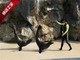端午节鄂州周边游去香港两天一晚海洋公园只需