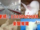 济宁|实验动物信息网|实验动物养殖