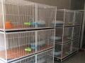 出售九成新的猫笼子