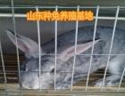 出售獭兔 杂交野兔 肉兔 长毛兔 种兔 免费回收