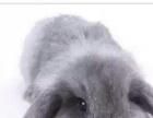 萌萌哒的宠物兔,非常可爱 o