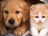 北京優質寵物狗繁殖基地長期出售寵物幼犬 保證品質健康