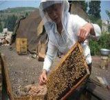 遵义中蜂养殖,遵义蜂蜜出售