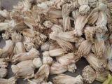 加工玉米粑 冻粑的玉米叶子包谷叶