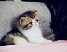 沈阳 哪里有波斯猫卖 多少钱