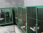 福州宠牧宠物狗训练基地 专业上门教狗狗 集中训狗