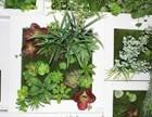 贵州贵阳仿真植物屏壁,植物屏风及植物植物壁画设计哪家强