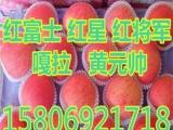 黑龙江红富士苹果价格批发基地   70119