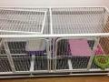 一米六繁殖猫笼