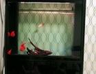水族鱼缸1600元