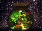永华汇微景观玻璃瓶多肉苔藓微景观可带灯植物生态花瓶 创意礼品