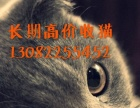 长年出售各种宠物猫