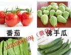 饕餮盛宴 洛阳春节蔬菜年货集装箱 海鲜年货集装箱