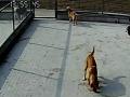 0791爱宠南昌不关笼子的宠物寄养