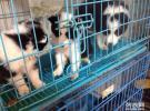 专业繁殖 犬舍直销,世界名犬 品质保障 签订购买合同